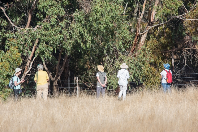 Bellbrae bird walk
