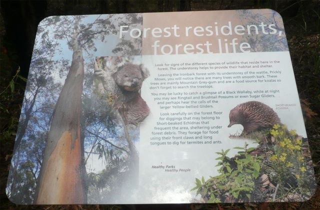 Forest residents, forest life sign