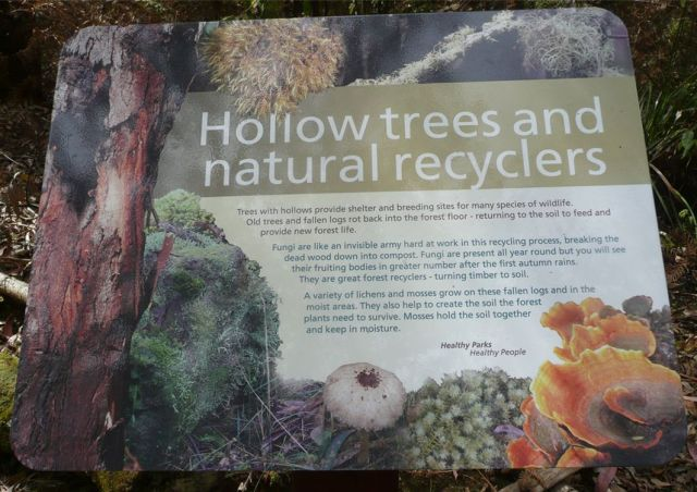 Hollow trees and natural recyclers